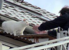 15.01.2017 ++Düsseldorf++ Katzenrettung mit einer Drehleiter von einem Hausdach  Die Feuerwehr Düsseldorf wurde am frühen Mittag zu einem Tierrettungs-Einsatz auf die Bahlenstraße alarmiert. Eine Katze befand sich auf dem Dach eines Mehrfamilienhauses und kam von alleine nicht mehr runter. Die Katze soll sich mindestens seit dem gestrigen Tag auf dem Dach befunden haben. Über eine Drehleiter konnte die unverletzte, aber durchgefrorene Katze schließlich von dem erleichterten Besitzer gerettet werden. Im Einsatz waren ein Hilfeleistungslöschfahrzeug, sowie die Drehleiter der Feuer- und Rettungswache 7. *** Local Caption *** 15.01.2017 ++Düsseldorf++ Katzenrettung mit einer Drehleiter von einem Hausdach  Die Feuerwehr Düsseldorf wurde am frühen Mittag zu einem Tierrettungs-Einsatz auf die Bahlenstraße alarmiert. Eine Katze befand sich auf dem Dach eines Mehrfamilienhauses und kam von alleine nicht mehr runter. Die Katze soll sich mindestens seit dem gestrigen Tag auf dem Dach befunden haben. Über eine Drehleiter konnte die unverletzte, aber durchgefrorene Katze schließlich von dem erleichterten Besitzer gerettet werden. Im Einsatz waren ein Hilfeleistungslöschfahrzeug, sowie die Drehleiter der Feuer- und Rettungswache 7.