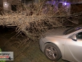 Baum stürzte durch einen Zaun und beschädigte ein Auto leicht