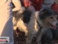 Feuerwehr-rettet-Hund-aus-Fuchsbau-10